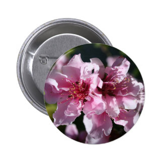 Peach Tree Blossom With Garden Background Pinback Buttons