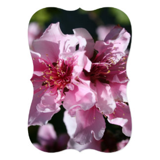 Peach Tree Blossom With Garden Background Announcements