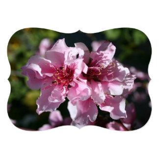 Peach Tree Blossom With Garden Background Personalized Announcements