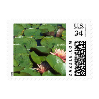 Peach Water Lilies, Green Lily Pads, Lotus Flowers Postage Stamp