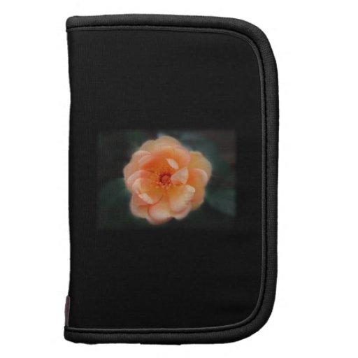 Peach - Yellow rose, on black. Folio Planners