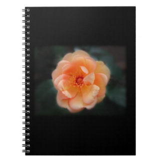 Peach - Yellow rose, on black. Notebook