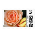 Peach & Yellow Rose Postage Stamp