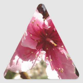 Peachblossom.jpg Triangle Sticker