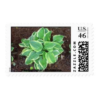 Peachtree City GA Postage Stamp