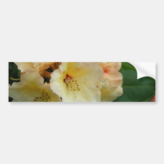 Peachy Cream Azaleas Bumper Sticker