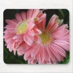 Peachy Pink Daisies Mousepad