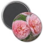 "Peachy Pink English Rose 3"" Round Magnet Magnet"