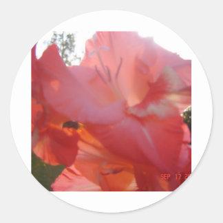 Peachy Pink Gladiola :) Classic Round Sticker