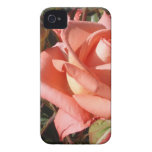 Peachy Pink Rose iPhone 4 Case-Mate Cases