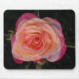 Peachy Pink Rose Mouse Pad