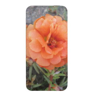 Peachy Portulaca Flower iPhone 5 Pouch