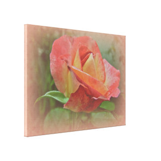 Peachy Rose Blossom - Right Hand Canvas Print