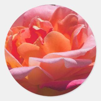 Peachy Rose Classic Round Sticker