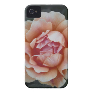 Peachy Rose iPhone 4 Case-Mate Case