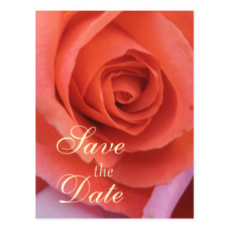 Peachy Wedding Rose Postcard