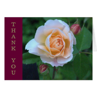 PEACHY-YELLOW COLORED ROSE / THANK YOU CARD