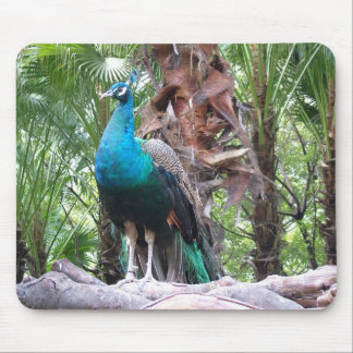 peacock,孔雀 mouse pad