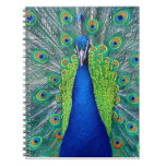 Peacock#1 Note Book