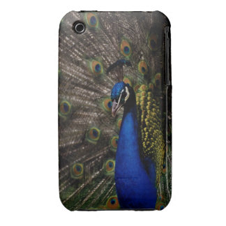 Peacock 2 iPhone 3 Case-Mate case