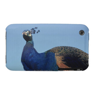 Peacock 2 iPhone 3 cases