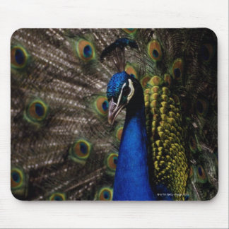 Peacock 2 mouse pad
