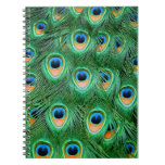 Peacock#2-Notebook