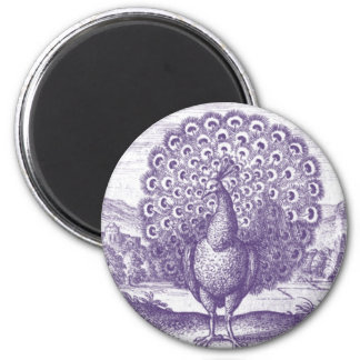 Peacock, a vintage engraving magnet