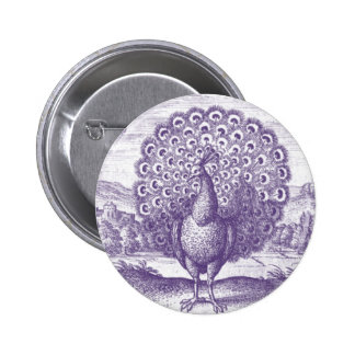 Peacock, a vintage engraving pinback button