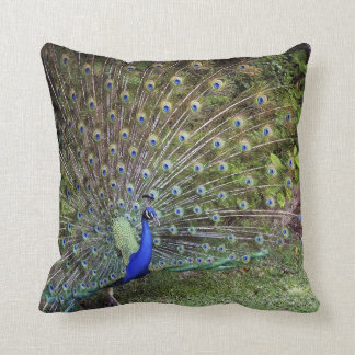 Peacock Accent Pillow