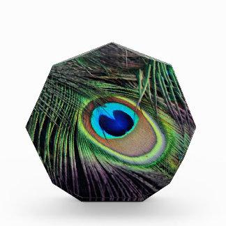 Peacock Acrylic Award