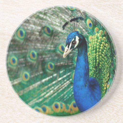 Peacock and Eiffel Tower Designs By Quick Brown Fo Drink Coasters