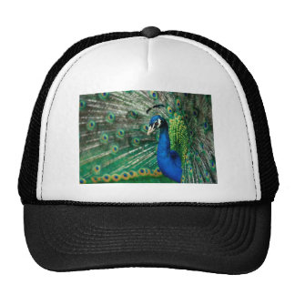 Peacock and Eiffel Tower Designs By Quick Brown Fo Trucker Hat