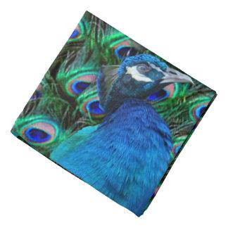 Peacock and Feather Bandana