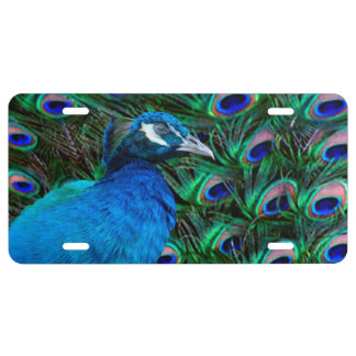 Peacock and Feather License Plate