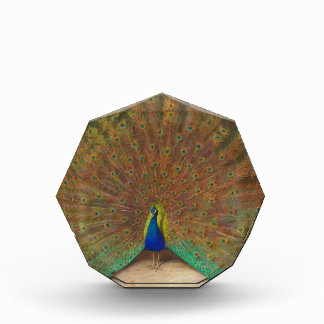 Peacock and peacock butterfly awards