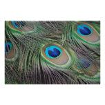 Peacock Art Photo
