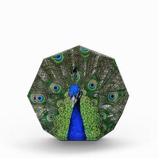 Peacock Awards