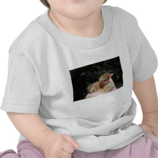 Peacock baby chick in hand tshirts