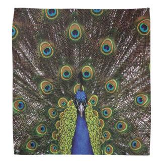 Peacock Bandana