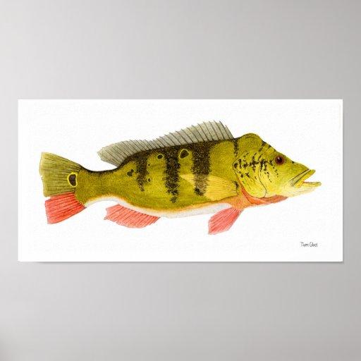 Peacock Bass Art Poster