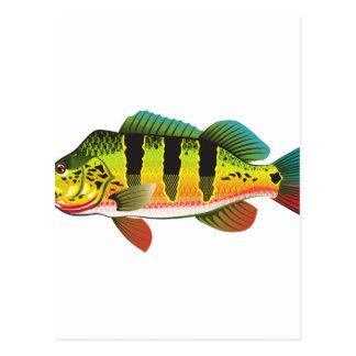 Peacock Bass bright Ocean Gamefish illustration Postcard