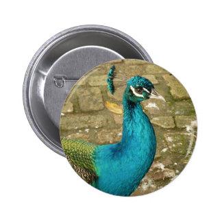 Peacock Beautiful Blue Bird Nature Photography Button