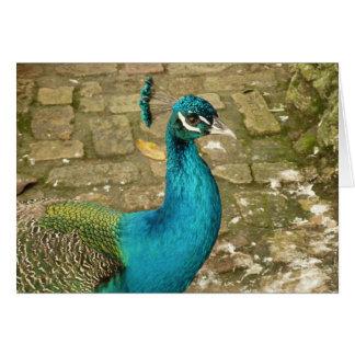 Peacock Beautiful Blue Bird Nature Photography Card