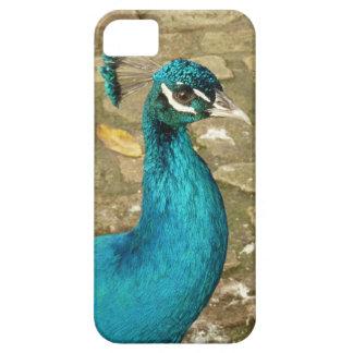 Peacock Beautiful Blue Bird Nature Photography iPhone SE/5/5s Case
