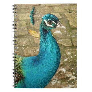 Peacock Beautiful Blue Bird Nature Photography Notebook