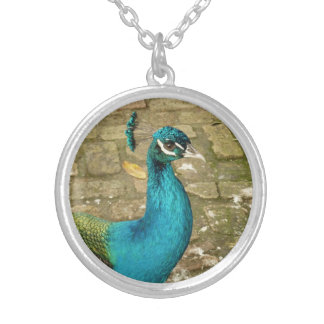 Peacock Beautiful Blue Bird Nature Photography Silver Plated Necklace