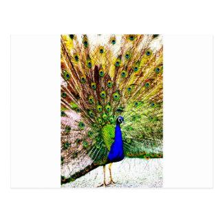 Peacock Beautiful Green Bird Animal Royal Luxury S Postcard