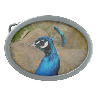 Peacock Belt Buckle