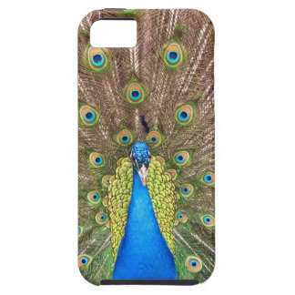 Peacock bird blue feather photo iphone 5 case mate